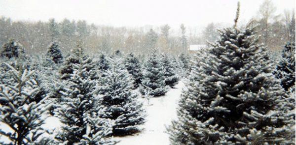Oh Christmas Tree..Oh Christmas Tree